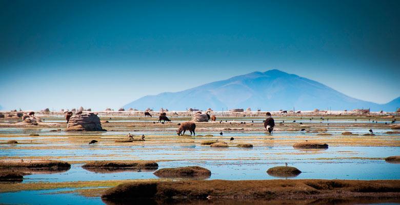 Caminata Lago Uru Uru