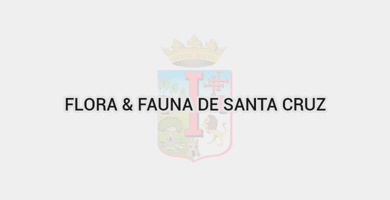 Flora & Fauna de Santa Cruz