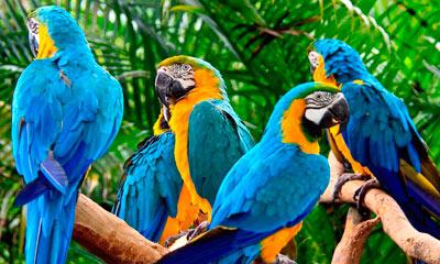 zoologicos-de-bolivia