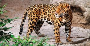 Fauna: Parque Nacional Amboró