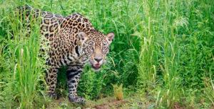 Fauna: Parque Nacional Noel Kempff Mercado