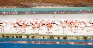 Fauna: Reserva Eduardo Avaroa