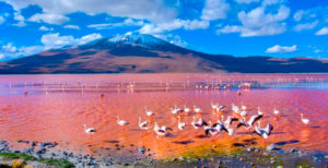 Flamencos: Laguna Roja