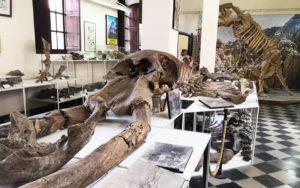 Museo Nacional Paleontológico