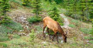 Fauna: Parque Nacional Toro Toro