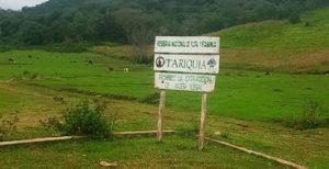 Flora: Reserva de Tariquía