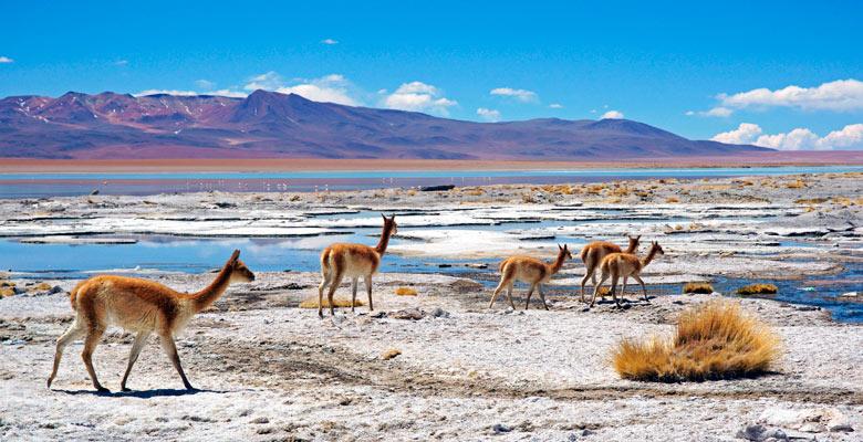 Reserva Nacional de Fauna Andina Eduardo Abaroa