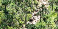 Área Natural de El Palmar