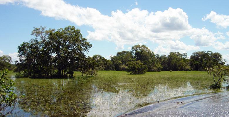 Área natural de manejo integrado San Matías
