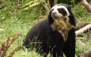Fauna: Área Natural de El Palmar