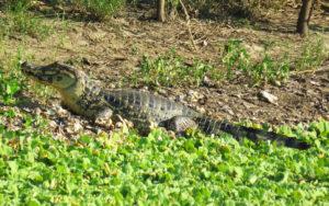 Fauna: Área Natural San Matías