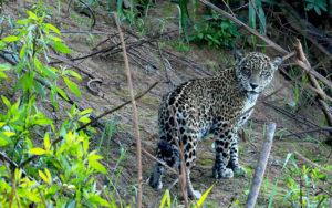 Fauna: Parque Nacional Cotapata