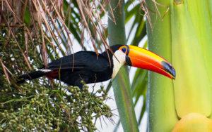 Fauna: Parque Nacional Iñao