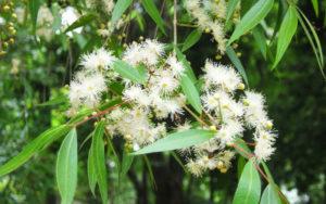 Flora: Parque Nacional Aguaragüe