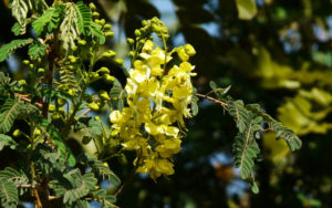 Flora: Parque Nacional Otuquis