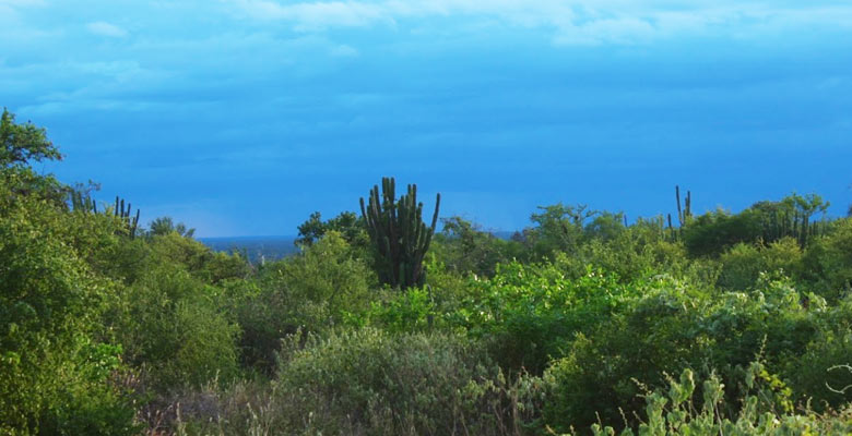 Parque Nacional Kaa Iya del Gran Chaco